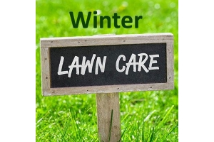 Your Winter Lawn Care Guide