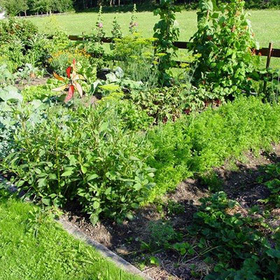 The history of allotments