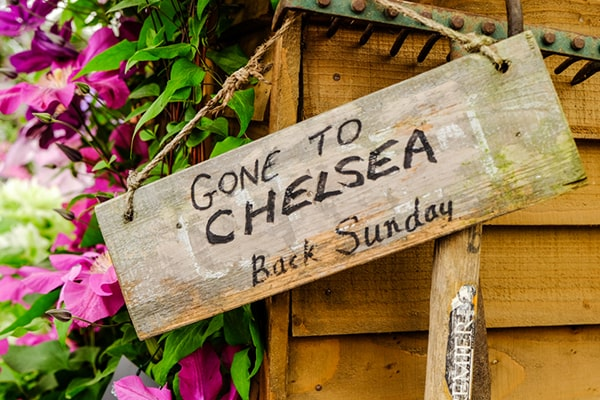 RHS Chelsea Flower Show 2015: What was available?