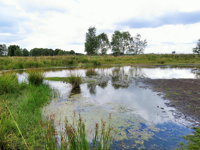Flagship Ponds Project with Freshwater Habitats Trust