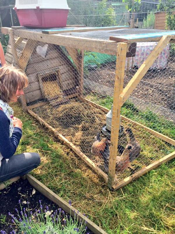 Keeping chickens with Pocket Farm
