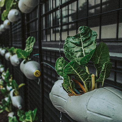 On the Up – Grow Your Own Fruit and Veg on a Fence Panel