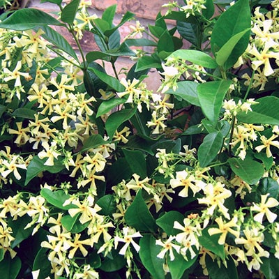 The Most Popular Climbing Plants and How to Care for Climbers