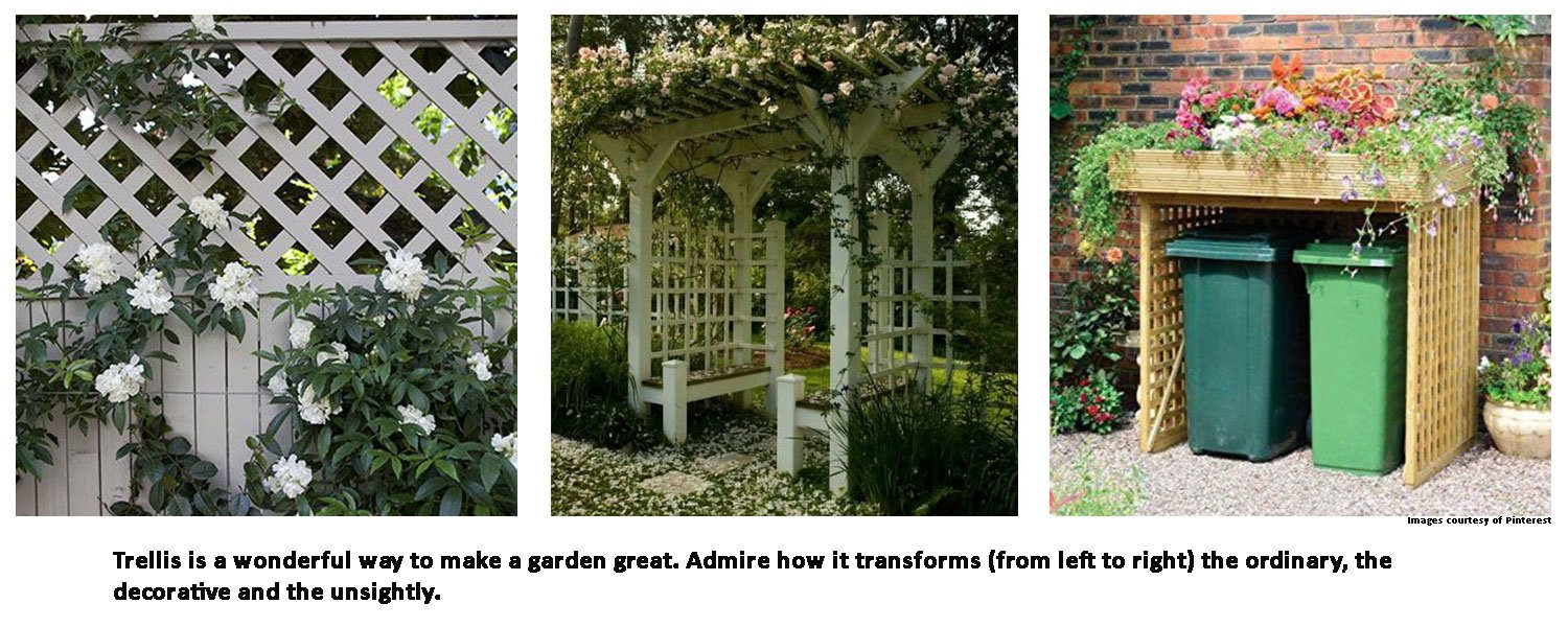 Trellis is a wonderful way to make a garden great