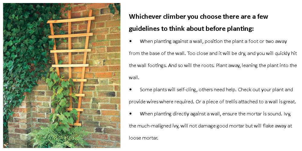 guidelines before planting climbers