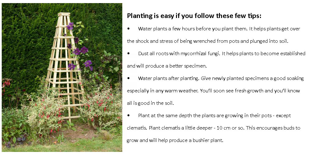 planting climbers should be easy